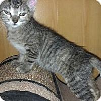 Adopt A Pet :: JingleBelle - Dallas, TX