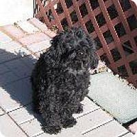 Adopt A Pet :: Hondo - Alliance, NE