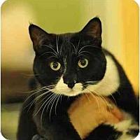 Adopt A Pet :: Matthew - Portland, OR