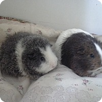 Adopt A Pet :: Eskimo & Ivy - San Antonio, TX