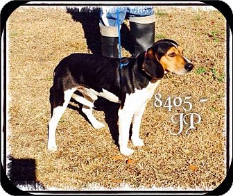 Hound (Unknown Type) Mix Dog for adoption in Dillon, South Carolina - JP