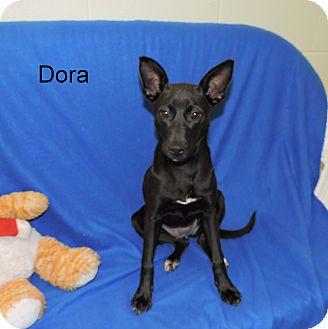 Terrier (Unknown Type, Medium) Mix Puppy for adoption in Slidell, Louisiana - Dora