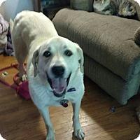 Adopt A Pet :: Sassy - Minneapolis, MN