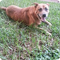 Adopt A Pet :: Mack - Davie, FL