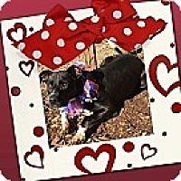 Adopt A Pet :: Sperry - Unionville, VA