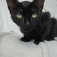 Adopt A Pet :: Herbert - Lakeland, FL