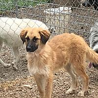 Adopt A Pet :: Almond - Parker, KS
