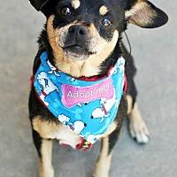 Adopt A Pet :: Shiloh--Video! - Griffin, GA