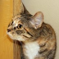Adopt A Pet :: Siri - Dodgeville, WI