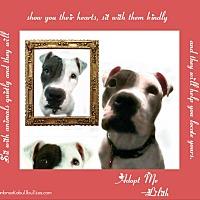 Adopt A Pet :: Lilith - Des Moines, IA