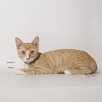 Adopt A Pet :: Jonathan - Riverside, CA