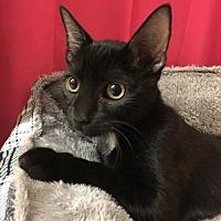 Adopt A Pet :: Buddah - Mesa, AZ