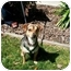 Photo 2 - Beagle/Terrier (Unknown Type, Small) Mix Dog for adoption in Castro Valley, California - Pepper