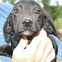 Adopt A Pet :: Spencer - Staunton, VA