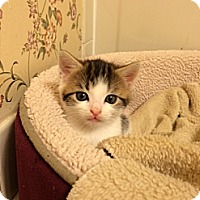 Adopt A Pet :: SKYE - Hamilton, NJ