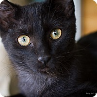 Adopt A Pet :: Harper - Bulverde, TX