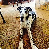 Adopt A Pet :: Maximus - Mesa, AZ