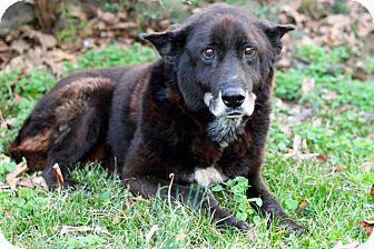 Husky Mix Dog for adoption in Salem, New Hampshire - MAX