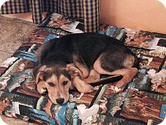 German Shepherd Dog Mix Puppy for adoption in Medina, Tennessee - Sloan