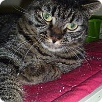 Adopt A Pet :: Tatiana - Hamburg, NY