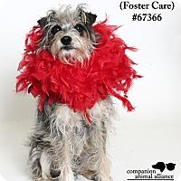 Adopt A Pet :: Heidi (Foster Care) - Baton Rouge, LA