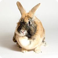 Adopt A Pet :: Ellie - Kingston, ON