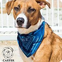 Adopt A Pet :: Carter Meyer - Seattle, WA