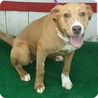 Adopt A Pet :: Trooper meet me 6/30 - East Hartford, CT