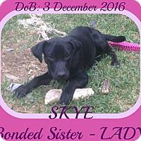 Adopt A Pet :: SKYE - New Brunswick, NJ