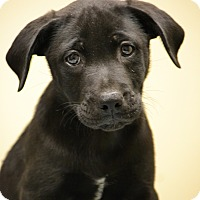 Adopt A Pet :: Finion - Hagerstown, MD