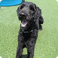 Adopt A Pet :: Chester - House Springs, MO