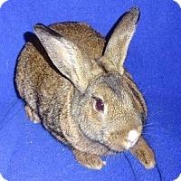 Adopt A Pet :: Turbo - Woburn, MA