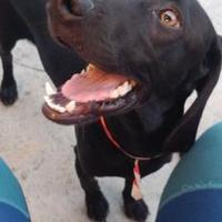 Adopt A Pet :: Logan - Davie, FL