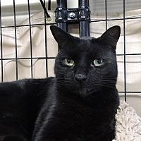 Adopt A Pet :: Isaac - Massapequa, NY