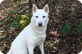 Siberian Husky Mix Dog for adoption in Cleveland, Georgia - Kyah
