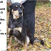 Adopt A Pet :: # 585-10 - ADOPTED! - Zanesville, OH
