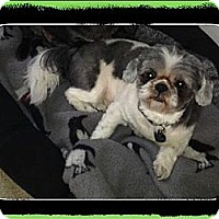 Adopt A Pet :: Phillipe - Playa Del Rey, CA