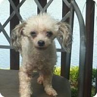 Adopt A Pet :: Chela - Raleigh, NC