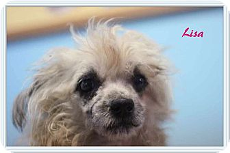 Terrier (Unknown Type, Small) Mix Dog for adoption in Ahoskie, North Carolina - Lisa
