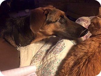 German Shepherd Dog/Hound (Unknown Type) Mix Dog for adoption in West Richland, Washington - Samantha