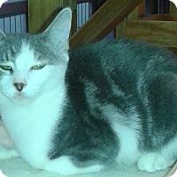 Adopt A Pet :: Starla - Whittier, CA