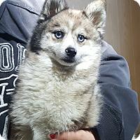 Adopt A Pet :: Kasey - Antioch, IL