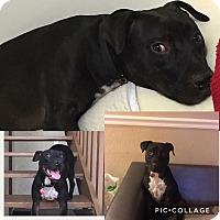 Adopt A Pet :: Faith - Homestead, FL