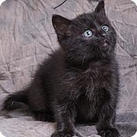 Adopt A Pet :: TOMMY - Anna, IL