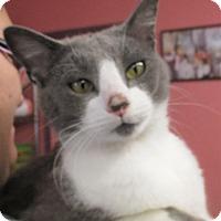 Adopt A Pet :: Darren - Reeds Spring, MO