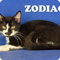 Adopt A Pet :: Zodiac - Carencro, LA