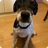 Adopt A Pet :: Kaylee in CT - East Hartford, CT