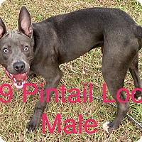 Adopt A Pet :: #39 - Seguin, TX