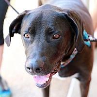 Adopt A Pet :: Baby (aka Blue) - San Diego, CA