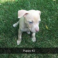 Adopt A Pet :: Patsy - Aurora, IL